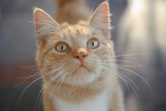 Orange cat Stock Photo