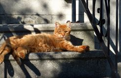Orange Cat. Light and late afternoon shadows play over an orange cat, lounging on cement steps royalty free stock images