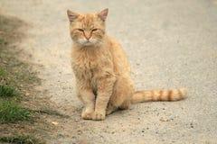 Orange cat. Sitting on the street royalty free stock images