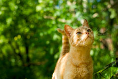Orange cat Stock Image
