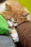 Orange cat asleep Royalty Free Stock Photo