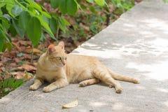 Orange cat in autumn leaves close up photo. Stock Images