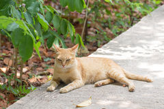 Orange cat in autumn leaves close up photo. Royalty Free Stock Photography