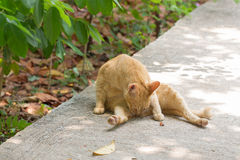 Orange cat in autumn leaves close up photo. Stock Photography