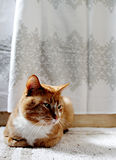Orange cat on bathmat Royalty Free Stock Photo