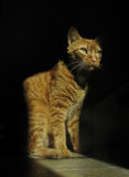 Orange Cat in Beam of Light. An orange tabby cat sits in a bright spot of sunlight stock photography