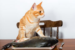 Orange cat and a big fish Stock Image