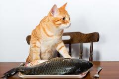 Orange cat and a big fish Stock Image