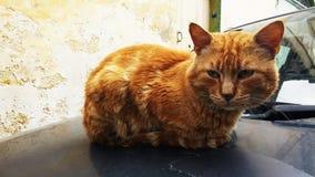 Orange cat. On the car, Malta stock image