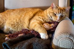 Orange cat cuddling with adorable sock monkey Royalty Free Stock Photos