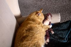 Orange cat cuddling with adorable sock monkey Stock Photography