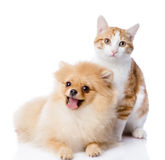 Orange cat and dog. dog looking at camera. Stock Photo