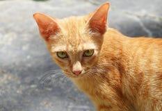 Orange cat eye Royalty Free Stock Images