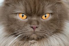 Orange Cat eyes close up detail Royalty Free Stock Photos
