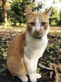 A orange cat in the forest. A orange cat sits in the forest Royalty Free Stock Image