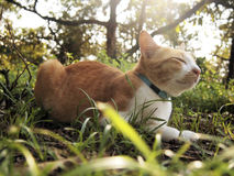 A orange cat in the forest. A orange cat sleeps in the forest Stock Photos