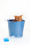 Orange Cat Getting a Bath in a Bucket. Bath time for a wet and unhappy orange Tabby cat sitting inside of a blue plastic wash bucket with suds and a blue sponge Royalty Free Stock Photo