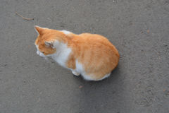 Orange cat on gray beton. Orange cat Royalty Free Stock Image