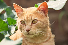 Orange cat happy in the nature Royalty Free Stock Photo