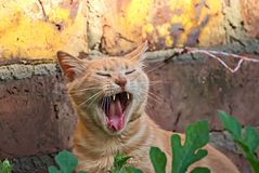 Orange cat happy in the nature. Happy cat enjoys the nature by day Royalty Free Stock Photography