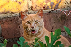 Orange cat happy in the nature Royalty Free Stock Images