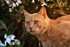 Orange cat happy in the nature. Happy cat enjoys the nature by day Stock Images