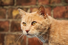 Orange cat happy in the nature. Happy cat enjoys the nature by day Royalty Free Stock Images