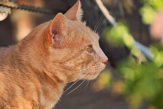 Orange cat happy in the nature. Happy cat enjoys the nature by day Stock Photo