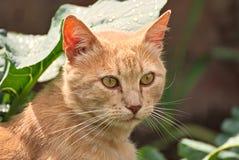 Orange cat happy in the nature Stock Image