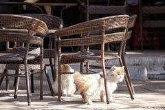 Orange cat Stock Images