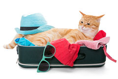 Orange cat lay on a suitcase Royalty Free Stock Images