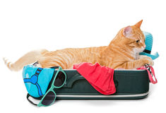 Orange cat lay on a suitcase Stock Images