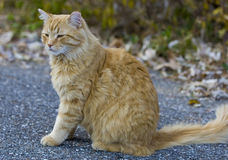 Orange cat looking away outside in yard Stock Photo