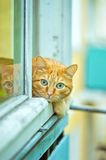Orange Cat lying on the window sill. Red Cat lying on the window sill Stock Photography