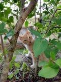 Orange cat. Orange and white cat with brown eyes stock photo