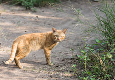 Orange cat outdoor in nature Royalty Free Stock Photo