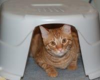 Orange cat peeking out Royalty Free Stock Photos