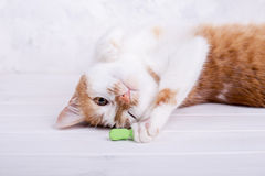 Orange cat playing with toy. Funny cat on wooden background. Playful young pet stock photo