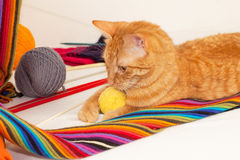 Orange Cat Playing With Wool Clews And Balls Royalty Free Stock Photos
