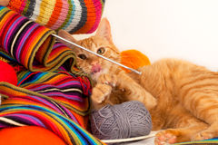 Orange cat playing with wool clews and balls Stock Photography