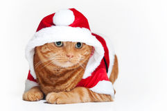 An orange cat in a red and white Santa outfit Stock Images
