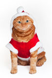 An orange cat in a red and white Santa outfit Royalty Free Stock Photography