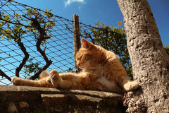 Orange cat relaxing. In the summer sun on a stone fence Royalty Free Stock Photography