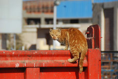 Orange cat riding on a garbage container Stock Photos