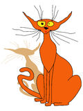 Orange cat sitting Royalty Free Stock Photo