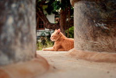 Orange cat. Sitting in concrete pipe Royalty Free Stock Images