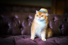 Orange cat sitting on a sofa Stock Photos