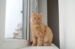 Orange cat. Sitting on the window sills Royalty Free Stock Image