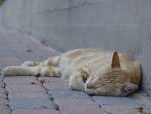 Orange, Cat, Sleep, Sidewalk Stock Photo