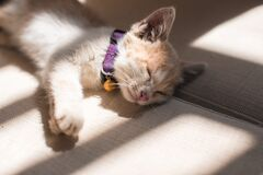 Orange Cat Sleeping on the Grey Surface Royalty Free Stock Photo